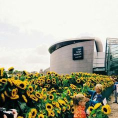 van gogh museum, surrounded by 125k sunflowers where everyone was allowed to take them home, as many as they wanted.