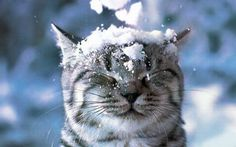 Cute Kitty In The Snow http://ift.tt/2zgZ9Fp cute puppies cats animals