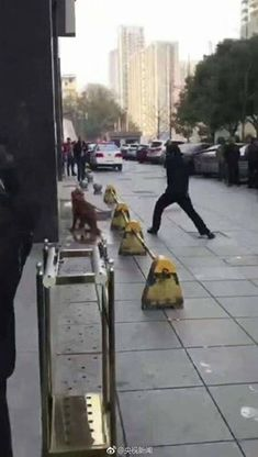 A police officer in China sadistically bludgeoned a chained golden retriever to death for three hours, in front of onlookers and children. Demand that this officer be arrested and severely punished for this monstrous attack.