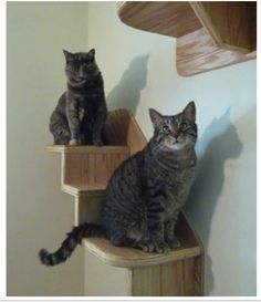 "The piece can hold up to 50 lbs. of cat!    Measurements:    3 Step Stair - 30""W x 20-3/4""H x 11-1/2""D  4 Step Stair - 36""W x 26-3/4""H x 11-1/2""D  5 Step Stair - 42""W x 32-3/4""H x 11-1/2""D  6 Step Stair - 48""W x 38-3/4""H x 11-1/2""D  Top and Bottom step is 11-1/2""W x 11""D, Middles steps are 6""W x 11""D  --intended to mount your unit on half-inch drywall"