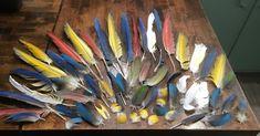 Fishing Umbrella Rig Crappie #fishingreels #FishingUmbrella Green Wing Macaw, Blue Gold Macaw, Fishing Girls, Fly Fishing, Itchy Mosquito Bites, Fishing Umbrella, Hobbies To Try, Dawn And Dusk, Salmon Fishing