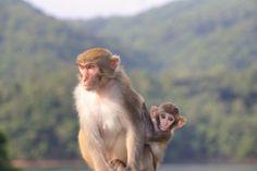 """Timo in de dierentuin in Duisburg tegen Siem die een aap roept. """"Heeft geen zin om te roepen, ze zijn hier toch Duits"""