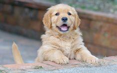 Accogliere un cane in casa, i consigli per prepararsi al meglio
