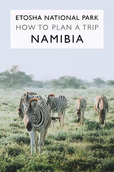 How To Plan A Trip To Etosha National Park | Namibia
