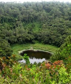 Trou aux Cerfs,Curepipe, Mauritius: -  volcanic crater in curepipe