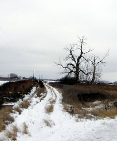 WINTER: Snow delineates a road less traveled that borders a dormant field outside Toppenish, WA.