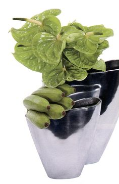 Clusters of green bananas and Anthuriums become sculptural forms when juxtaposed against the flowing lines of the shapely vessels. – @FloristsReview This modern arrangement is presented in two unique, polished aluminum Tulip Vases.