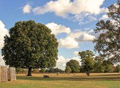 Bushy Park in Summer