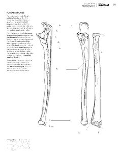 Kaplan Anatomy Coloring Book.pdf | boudli | Pinterest | Anatomy ...