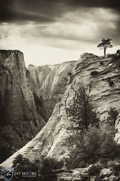 Tree | Zion National Park | © Jay Moore Photography
