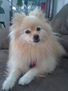 Very cute dog :) Love it