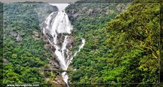 Dudhsagar Falls (literally Sea of Milk) is a four-tiered waterfall located on the Mandovi River in the border of Indian states of Karnataka and Goa. It is 60 km from Panaji by road and is located on the Madgaon-Belgaum rail route about 46 km east of Madgaon and 80 km south of Belgaum. Dudhsagar Falls is amongst India's tallest waterfalls with a height of 310 meters (1017 feet) and an average width of 30 meters (100 feet).
