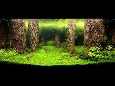 http://www.adaaust.com.au/gallery/contest2009/photo/0027_L.jpg