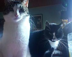 It food time hooman  . . . #casperithecat #bastithecat #catsofinstagram #instacat #cats #itstooearlyforthis