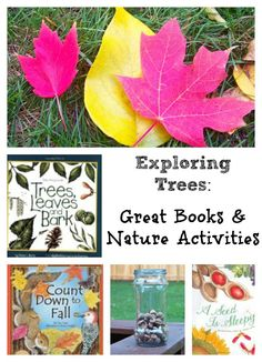 Leaf and seed activities that explore Fall with great picture books too!  Preschool, Kindergarten, 1st, 2nd and 3rd grade nature activity