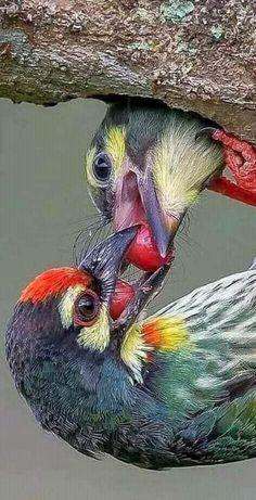 Pin on Birds Rare Birds, Exotic Birds, Colorful Birds, Pretty Birds, Beautiful Birds, Animals Beautiful, Nature Animals, Animals And Pets, Kinds Of Birds