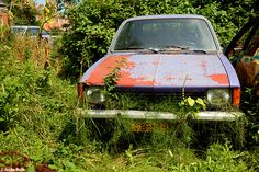 Autokerkhof (NL) July 2014 abandoned cars in the Netherlands auto oldtimer urbex decay Photo by: Jascha Hoste
