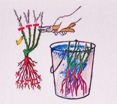 "Cum se fac butaşii de muşcate ""ca la carte"" Home And Garden, Outdoor Decor, Gardening, Flowers, Green, Plant, Cards, Lawn And Garden, Royal Icing Flowers"
