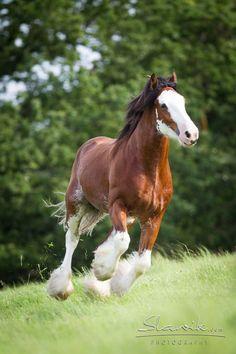 29a8b9d38d71871b03a6af64fc2df96b--cute-horses-pretty-horses.jpg 736×1,104 pixels