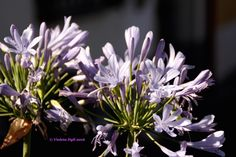 Fiore di colore Lilla