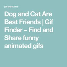 Dog and Cat Are Best Friends | Gif Finder – Find and Share funny animated gifs