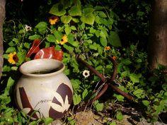 """""""flower-pot"""":-).... Brogo/NSW/Australia"""