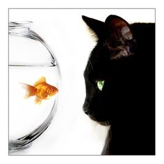 Eye to eye  ~~Cat: You know you've got some issues. Fish: What are you talking about my friend? Cat: You are going to forget everything we said in about 3 seconds. Fish: What do you mean? And who are you?
