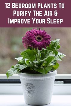 12 Bedroom Plants To Purify The Air & Improve Your Sleep - - These plants purify and clean the air and create a sense of calm and relaxation. Place a few in your bedroom to improve your sleep quality. Best Indoor Plants, Indoor Garden, Garden Plants, Outdoor Gardens, Rockery Garden, Vegetable Garden, Garden Landscaping, House Plants Decor, Plant Decor