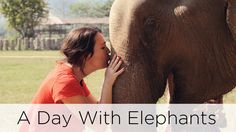 A Day With Elephants | Awesome Wave