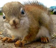 Cute Squirrel Pictures with Sayings | Via Quotes Queen