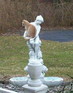 Funny cats - part 243 (40 pics + 10 gifs)