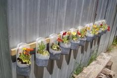 little garden with recycled milk containers