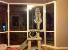 A cat soul in a dog body. (via 60cute)