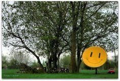 Smile Sat ..  solo canali comici???