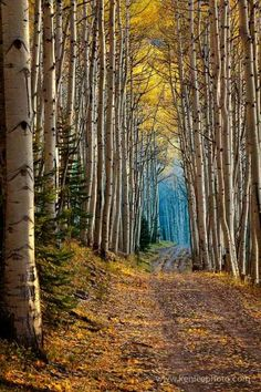 Aspen Cathedral xx
