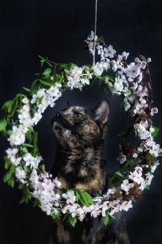 Flower power! / all photos taken because of a cat