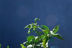 Orange Sprouts Me As A Girlfriend, Sprouts, Plant Leaves, Orange, Plants, Plant, Planets