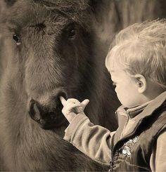 Kids and ponies haha lol Funny Horses, Funny Animals, Cute Animals, Photos Folles, Bad Family Photos, Cute Kids, Cute Babies, Funny Bunnies, Horse Love