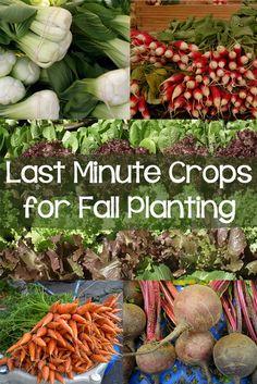Last Minute Garden Crops: http://chickenscratchny.com/2014/07/last-minute-garden-crops.html