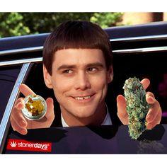 Dumb-and-Dumber-marijuana
