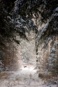 hyperb0rean:  Forest Deer by Cees  Your Daily Deer: Forest Deer by Cees