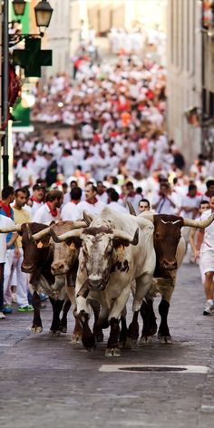 Running of the Bulls—Pamplona, Spain: White and Red clad men get chased by the Toro Bravo breed of cattle.