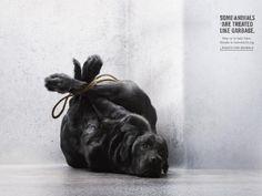 Foundation Tier im Recht: Dog