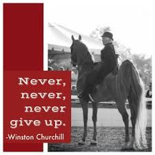 Image result for quotes about saddlebreds