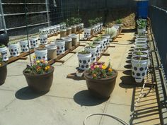 The Rain Gutter Grow System Goes To The Big Apple! A High School Grows I...