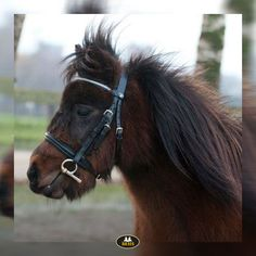 Mexicaans hoofdstel of 'normaal' hoofdstel? Horse Bridle, Horse Supplies, Mexican, Horses, Classic, Cute, Animals, Derby, Animales