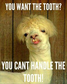 Funny Animal Pictures Of The Day Pics Funny Animals - 49 hilarious pictures people animals