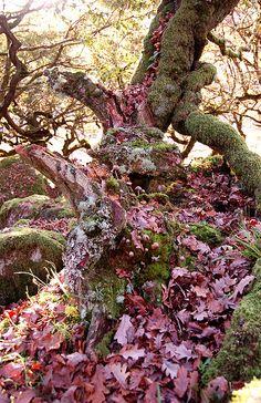 Wistman's Wood on dartmoor in Autumn by becca :-), via Flickr