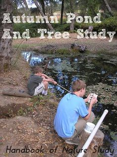 Autumn Pond and Tree Study ideas, including nature journal ideas.