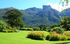 Kirstenbosch, Cape Town - 40 min from Somerset West Most Beautiful Gardens, Most Beautiful Cities, Wonderful Places, National Botanical Gardens, Endangered Plants, Table Mountain, Beaches In The World, Exotic Plants, Holiday Destinations